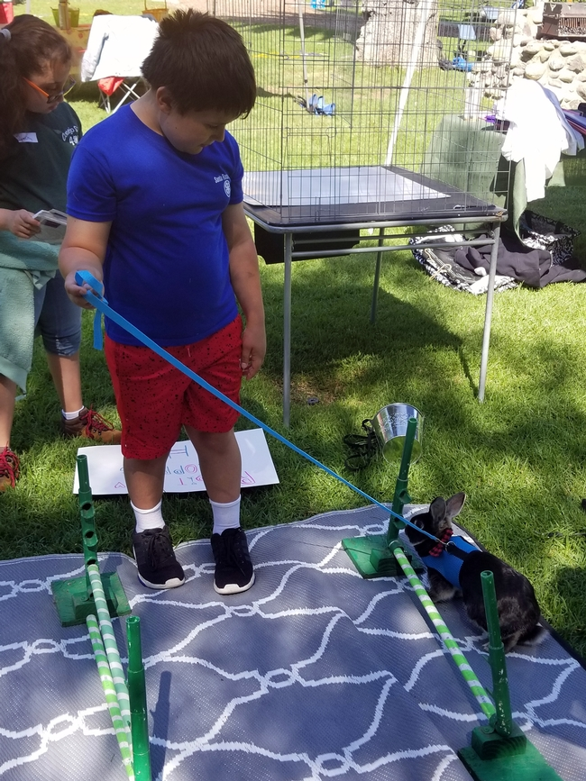 4-H'ers could do a rabbit hopping course!