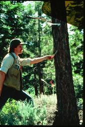 Standiford, shown doing research in the forest in the early 1980s, may be best known for his work in oak woodlands and forest stewardship.
