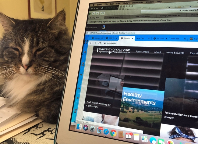 A gray and white tabby cat with its eyes closed lays next to a laptop displaying the ANR website.