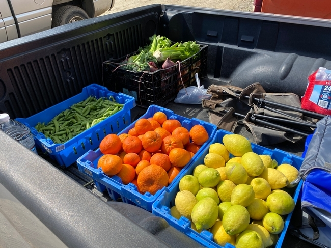 Fresh produce harvested at Hansen REC in Santa Paula was donated to Food Forward and Ventura County schools.