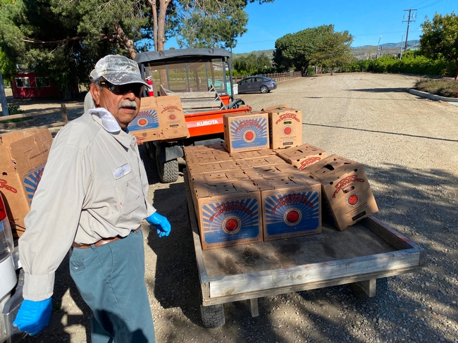 Hansen REC's Leon Preciado loads boxes of mandarins grown at Hansen REC for Food Forward to distribute to community members.