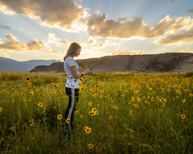 Dustin's daughter stands in a field of sunflowers, looking down at the flowers.