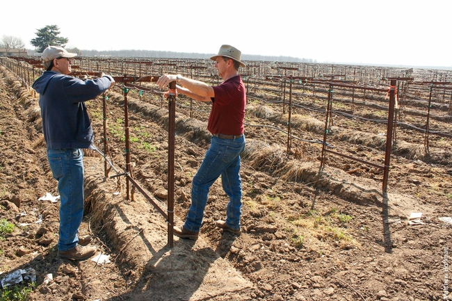 UC ANR Cooperative Extension farm advisor Paul Verdegaal (right) discussing trellising systems with Lodi winegrape grower Joseph Spano (left).