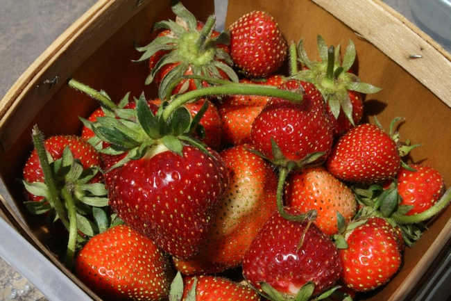 Organic strawberries is one of six crops for which production cost estimates are now available.