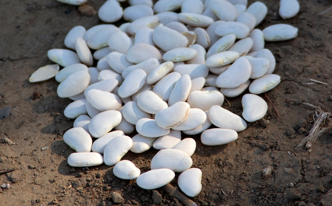 Dried lima beans