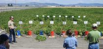 Rob Wilson describes a potato variety trial at Intermountain Research and Extension Center. for ANR news releases Blog