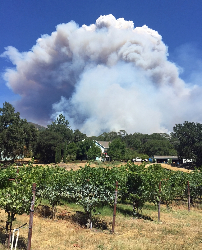 The 2018 River Fire started about 60 feet from Glenn McGourty's home, but the wind blew smoke away from his grapes. Photo by Glenn McGourty'