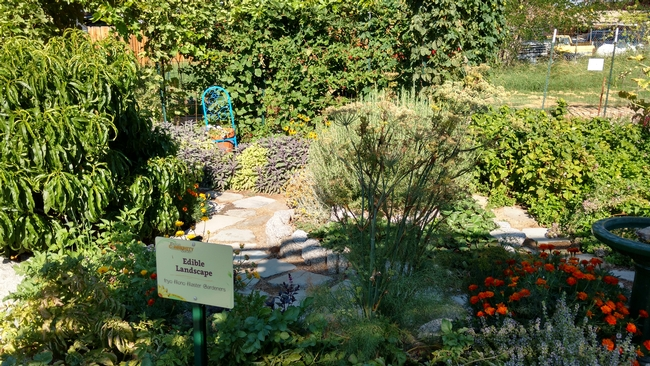 Edible landscape from Inyo Master Gardeners