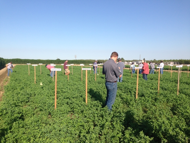 Field Day participants tour the alfalfa variety trial.