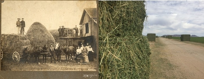 Figure 1. Old and New Methods of Hay Making