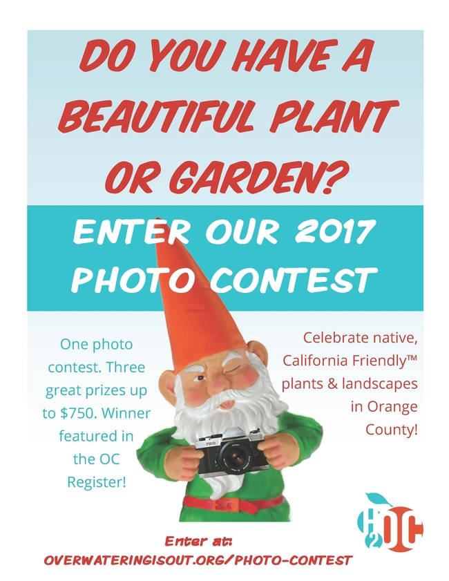 OCSW Photo Contest Flyer