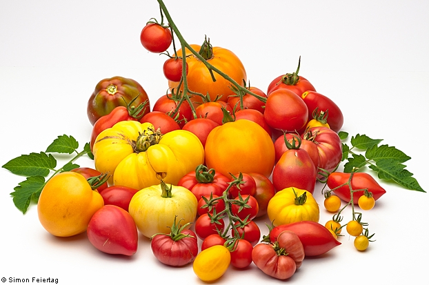 group of various tomato varieties