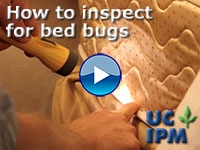UC Video -- How to inspect for Bed Bugs