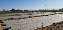 Black plastic tarps provide weed control for Climate Smart Agriculture Blog