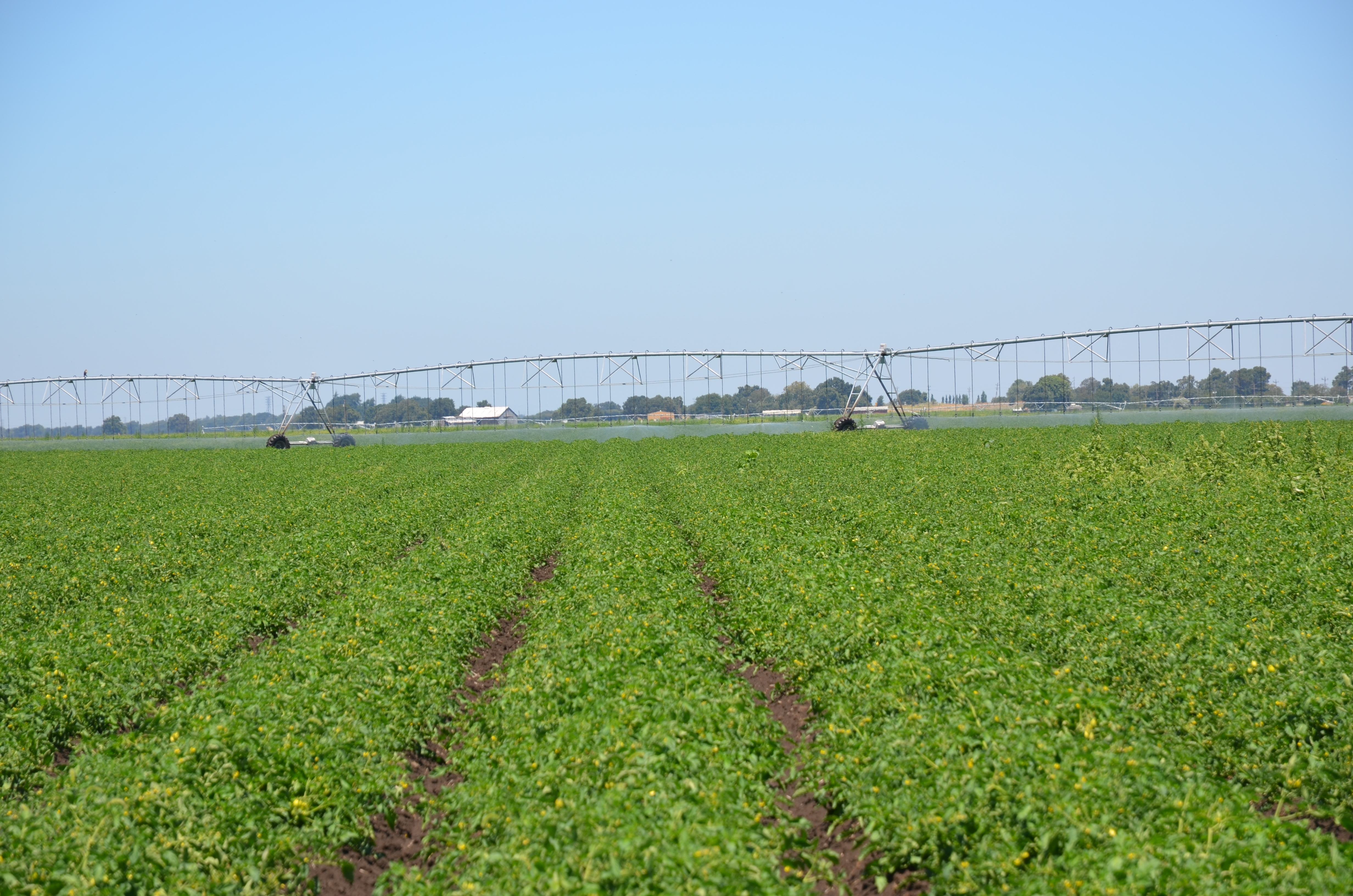 Casi Partners Work On Center Pivot Irrigated Tomatoes In