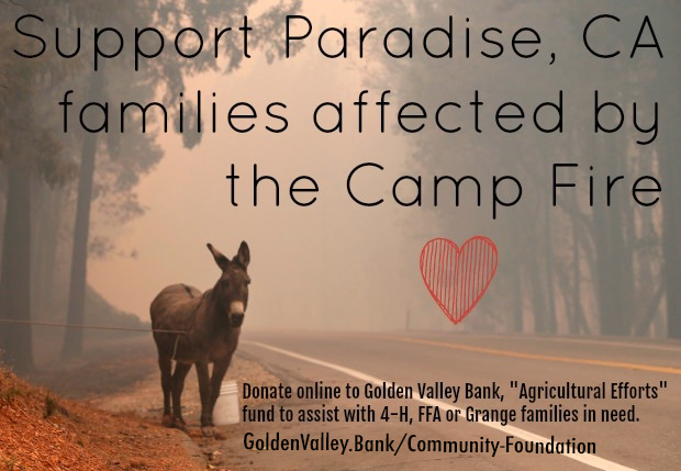 Support Paradise, CA families affected by the Camp Fire