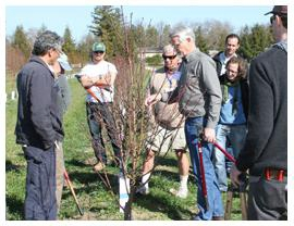 Dr. Ted DeJong and 2013 pomology extension course participants during a pruning workshop.