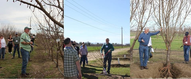 Course instructors Ted DeJong and Kevin Day leading hands on pruning lessons in the UC Davis teaching orchard.