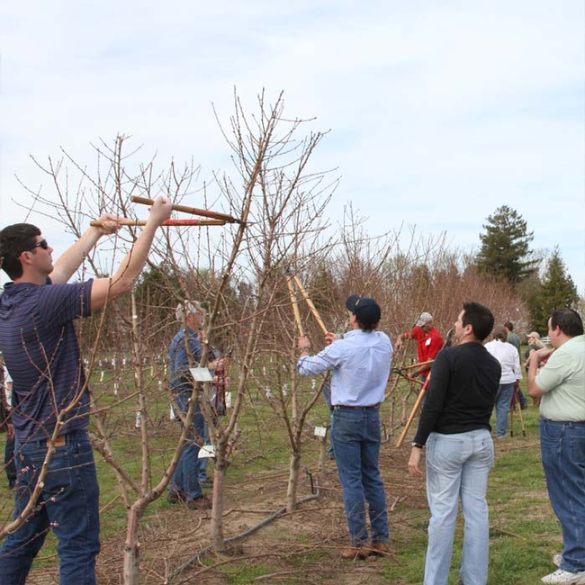 Hands-on pruning exercise during first week of the course.