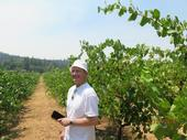 Prof. Vittorino Novello in a foothill vineyard.