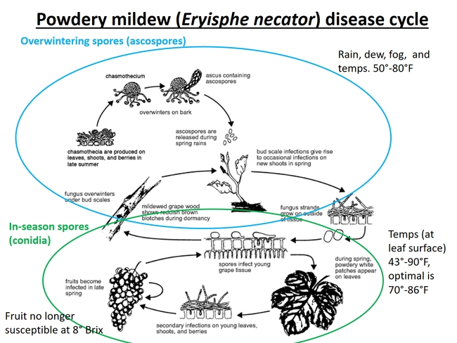Cycle of disease and spore production