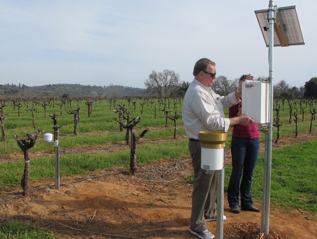 A man inspecting a weather station in a vineyard.