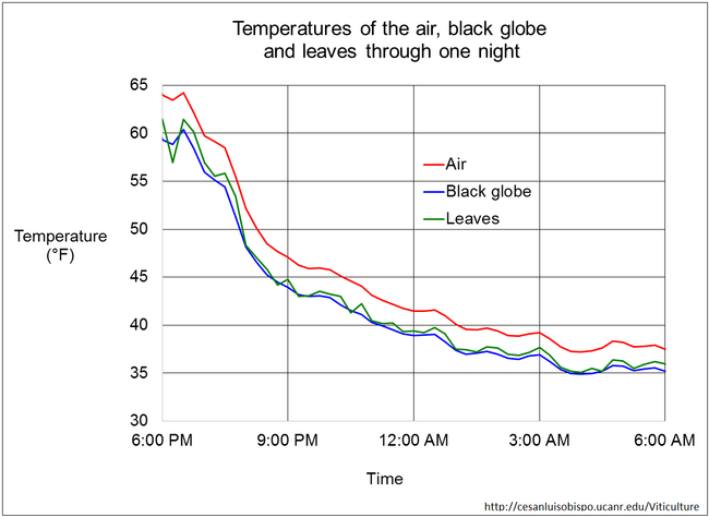 Figure 8. Comparison of temperatures of the air, grape leaves, and black globe at night. The black globe tracks exposed leaf temperatures fairly well.