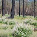 Herbaceous growth on California Tahoe Conservancy land in 2010.
