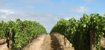 Heard it through the grapevine? Extension training ensures information accuracy. for Green Blog Blog