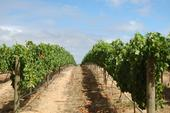 Heard it through the grapevine? Extension training ensures information accuracy.