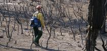 In some areas, the high-intensity Rim Fire burned all the vegetation. (Photo: USDA) for Green Blog Blog