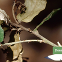 Homeowners can get tips for caring for backyard oak trees.