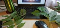 During the online class, participants went outside to gather and compare a variety of leaves. for Green Blog Blog