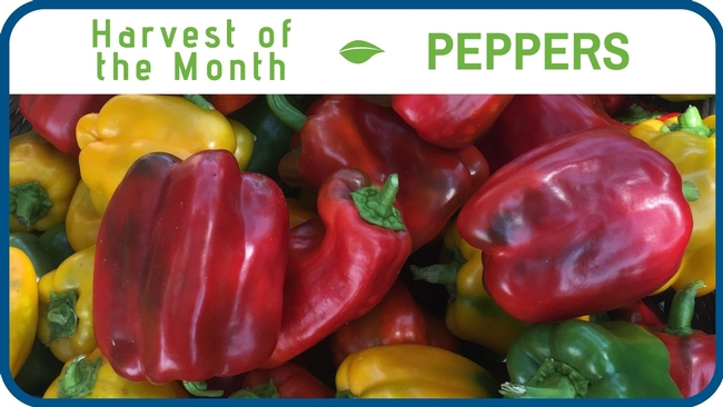 Peppers August