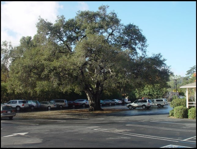 urban heat island shaded by tree can reduce temperatures 20 degrees in inland and desert cities