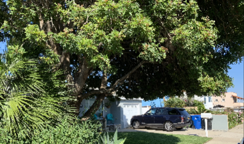 trees shade urban heat islands, absorb carbon dioxide and conserve energy for Landscape Horticulture Updates for Southern California Blog