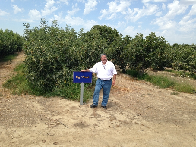 Ruben Perez, produce supervisor for Lucky Stores, poses in the fig orchard.