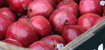 Freshly harvested pomegranates in a bin. for Kearney news updates Blog