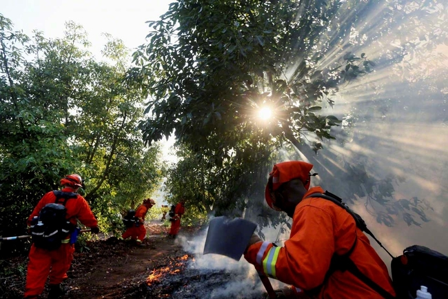 A CAL FIRE inmate crew fighting a wildfire in an avocado grove, May 2014. (Photo: Sandy Huffaker)