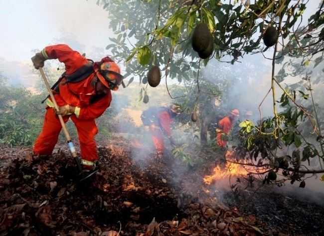 An inmate firefighter crew battles a fire in an avocado grove outside Fallbrook, Calif., May 14, 2014. (Photo: Sandy Huffaker)