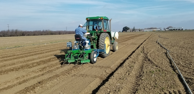 Planting garbanzo beans for a research trial at the UC West Side Research and Extension Center in the San Joaquin Valley, 2020.