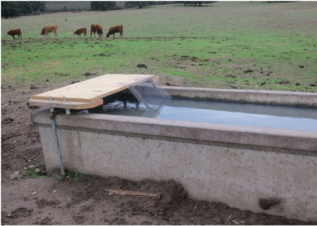Wildlife ramp designed by Peterson Land & Cattle Company.