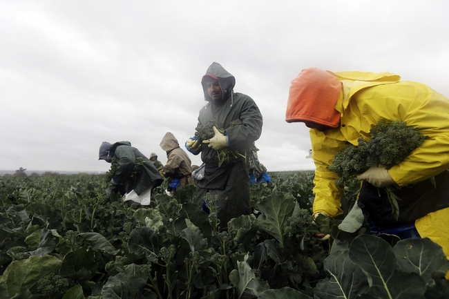 California workers