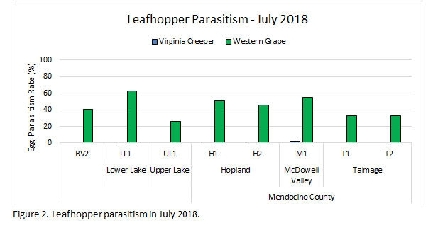 Leafhopper Parasitism July 2018