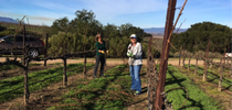 Jan Fedor and Mandy Salm gather up long canes from recently pruned Pinot Noir vines in the Santa Lucia Highlands, courtesy of Valley Farm Management. for UC Master Gardeners of Monterey Bay Blog