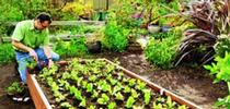 raised-bed-main-l for UCCE MG OC News Blog