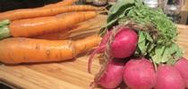 Carrots-Radishes for UCCE MG OC News Blog