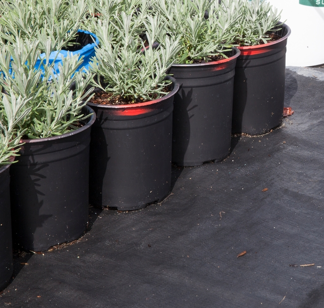 Weed cloth over gravel is a cost-effective way of reducing pot contact with the ground and water runoff