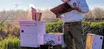 BeeHive for News from UC ANR South Coast REC and Beyond Blog