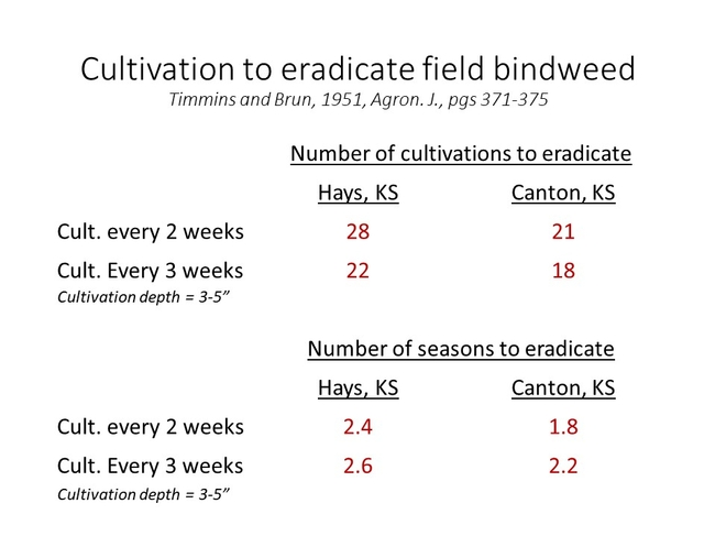 Cultivation and bindweed control